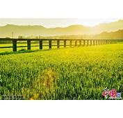 Hermoso Paisaje Veraniego Del Campo En Qiyang Hunan