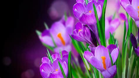 imagenes flores hd fondos de pantalla de flores fondos de pantalla y mucho