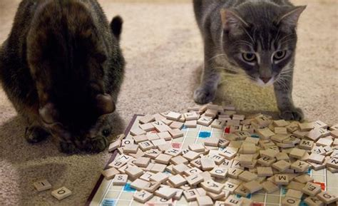 oi in scrabble scrabble cats go to 171 scrabble wonderhowto