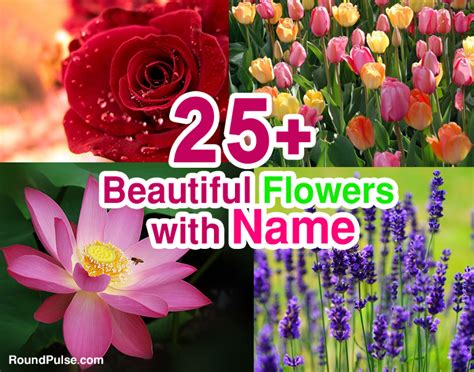 beautiful flowers names and pictures all flowers name chart life style by modernstork com