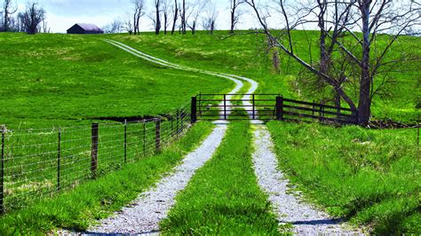 path road green fields trees landscapes nature earth