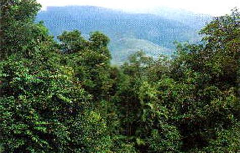 What Does Canopy In The Rainforest Plants Of The Rainforest