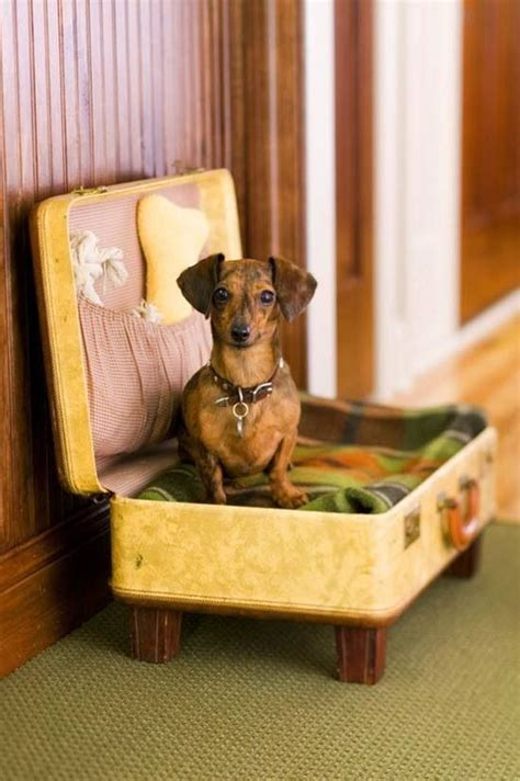 suitcase dog bed 1000 images about suitcase dog bed on pinterest vintage suitcases cats and pet beds