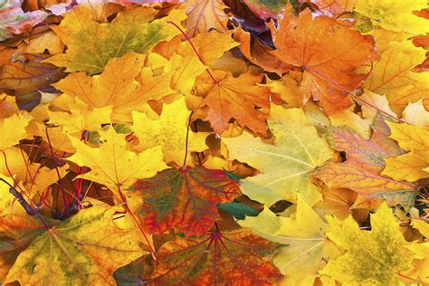 what are fall colors does a summer a brilliant fall howstuffworks