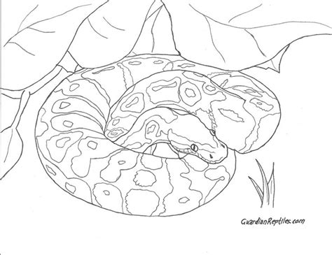 ball python coloring sheets bing images coloring for
