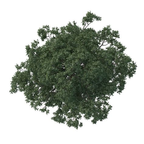 Trees Top of quot the white quot 3d architectural visualization