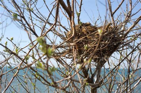 birds nest in tree bird nest on tree in front of the sea stock photo