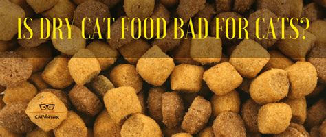 is food bad for cats is cat food bad for cats the junk food debate