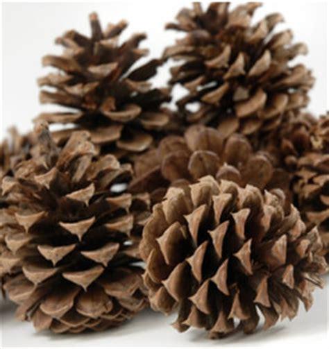 Artificial Pine Trees Home Decor ponderosa pine cones 12 cones