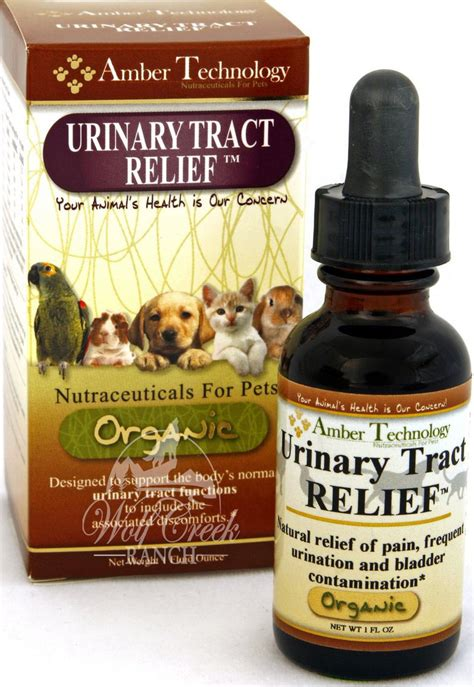 how to treat urinary tract infection in dogs utr aka urinary tract relief treatment for pet