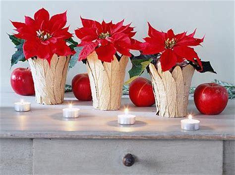 Weihnachtsstern Pflegen Wohnung by Weihnachtsstern Pflege Und Ideen F 252 R Weihnachtsdeko