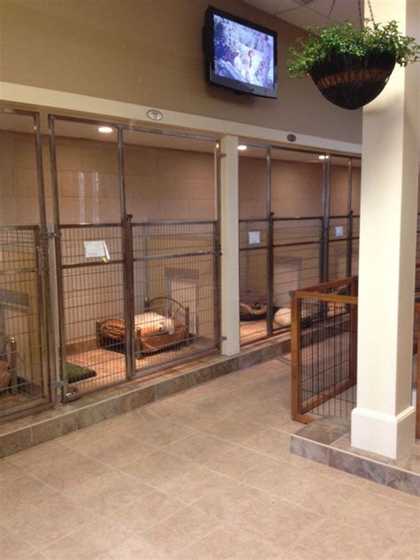 its dog daycare kennel grooming software 17 best images about boarding kennel ideas on pinterest