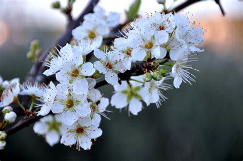 fiori alberi da frutto alberi da frutto da seminare a settembre e ottobre idee