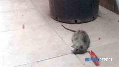 topi in casa cosa fare topi dal co abbandonato quot entrano in casa 232 un incubo