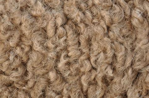 hair of the sustainable fibres what is camel hair trusted clothes