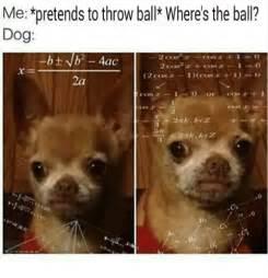 pretends  throw ball wheres  ball dog   ac