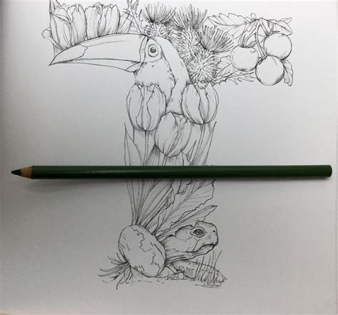the coloring book review the a z of flora and fauna coloring book review