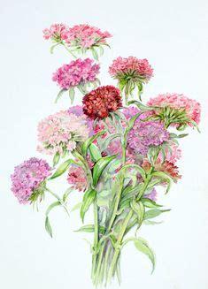 acquarelli fiori 1000 images about tuninetti on search