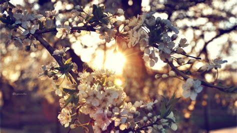full hd wallpaper sunset branch blurry background desktop