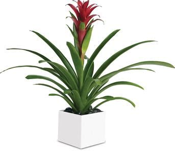 indoor plants online order online indoor plants as gifts with online delivery
