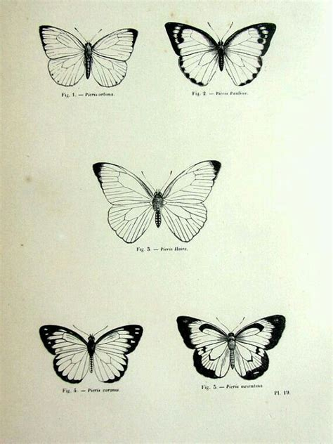 tattoo butterfly vintage 537 best images about tattoo ideas on pinterest henna
