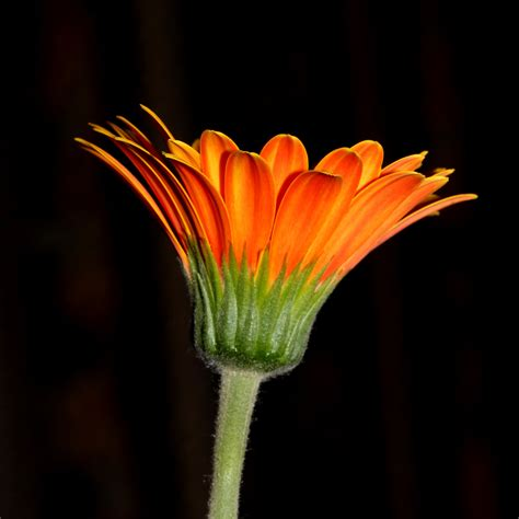 Simple Flower a simple flower 01 by s kmp on deviantart