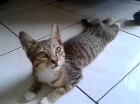film bayi ngomong kiamat kucing bisa bicara seperti manusia doovi