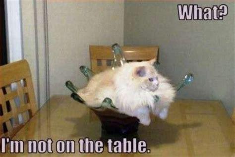Sassy Cat Meme - 16 sassy kitty memes that will crack you up