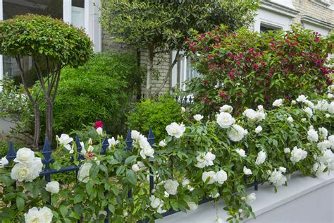 Right Rose, Right Place; Roses for North facing Walls