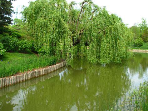 botanical gardens glencoe il botanical gardens glencoe il chicago botanic garden