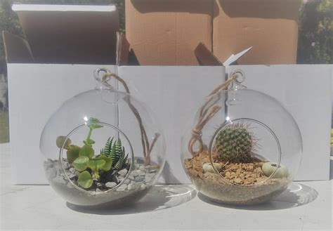 hanging glass balls hanging planters terrariums cape town