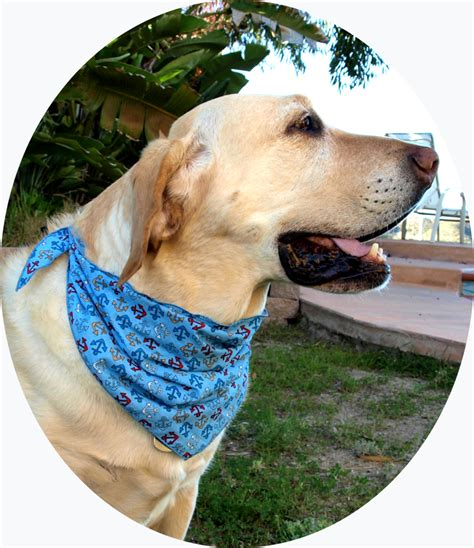 puppy bandanas pet bandana ultimate hat and skippers outdoor hats and nautical accessories