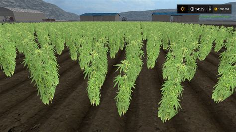 Marijuana Growing Ls cannabis crop mod farming simulator 2015 15 mod