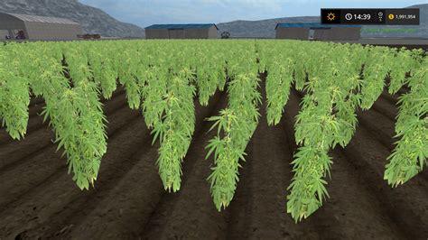 Marijuana Ls by Cannabis Crop Fs17 Farming Simulator 17 Mod Fs 2017 Mod