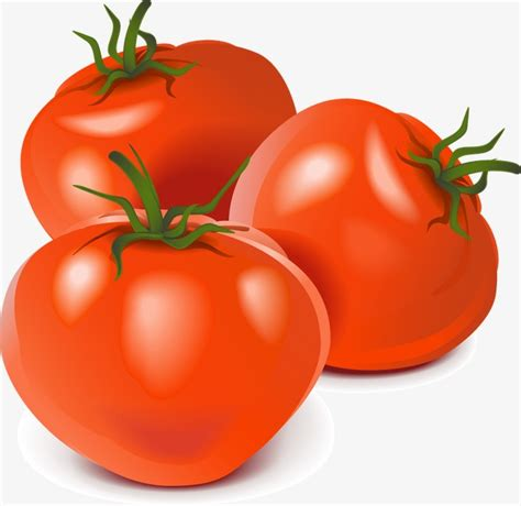 vector realistic vegetables tomato vector realism