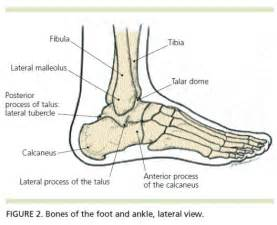 ankle skeleton diagram when an ankle sprain is not just an ankle sprain