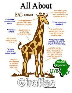 libro the giraffe that ate my all about giraffes book workbook african animal unit study