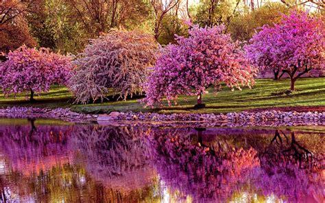 foto fiori primaverili sfondi primaverili 68 immagini