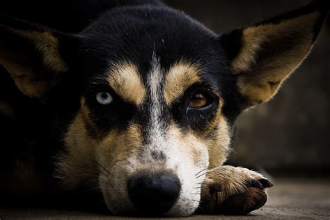 blindness in dogs for the blind dogs photographer pictures from and the world