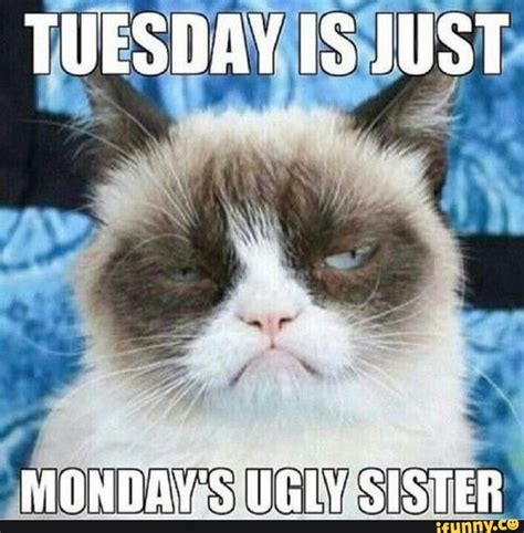 Tuesday Meme Positive