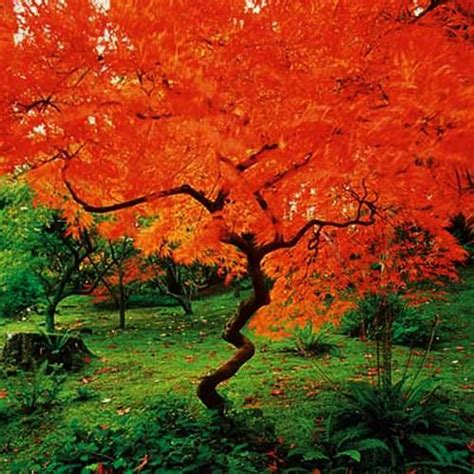 color trees beautiful plants for yard landscaping bringing gorgeous