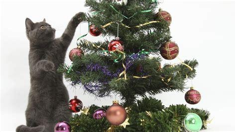 xmas tree made out of cats gatos engra 231 ados vs 193 rvore de natal compilation 2014 2015 hd 720p