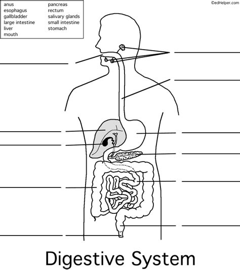 labeled digestive system diagram touch this image esophagus stomach liver