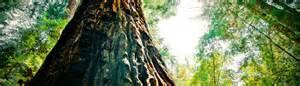 City Of Arborist San Jose Tree Removal Services City Arborist