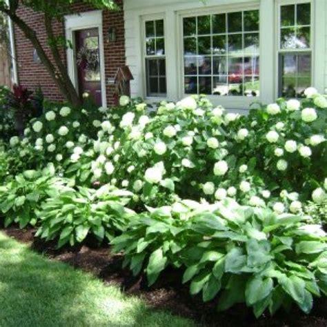 25 best ideas about hydrangea garden on - Hydrangea Front Yard