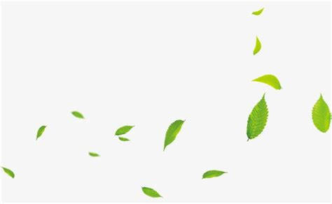 floating leaves leaves green green leaves png image for