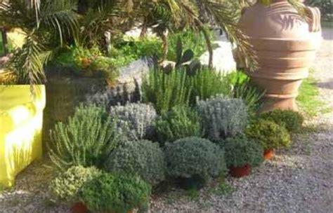 piante aromatiche in giardino piante aromatiche