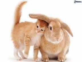 info animaux veterinaire couper les ongles d un lapin