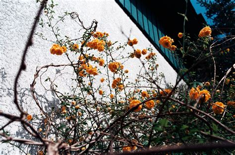 film petualangan alam liar gambar pohon alam cabang menanam daun bunga film