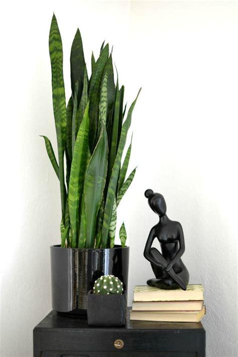 zimmerpflanzen schlafzimmer look pimp your room pflanze des monats bogenhanf